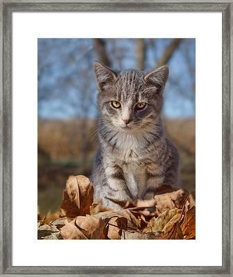 Autumn Farm Cat - 2 Framed Print