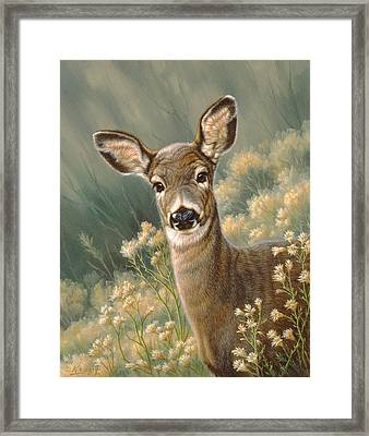 Autumn Fawn-blacktail Framed Print by Paul Krapf