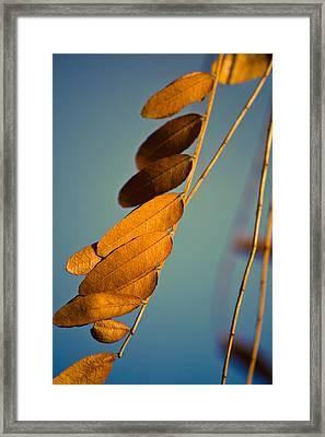 Autumn Feathers Framed Print