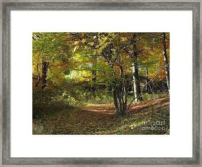 Autumn Feeling Framed Print by Lutz Baar