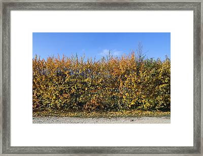 Autumn Fence Framed Print by Aleksandr Volkov