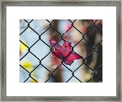 Autumn Fence Framed Print