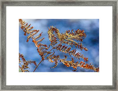 Autumn Fern Framed Print