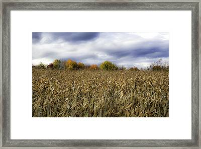 Autumn Field Framed Print by Sara Hudock