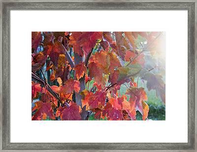 Autumn Flame Framed Print by Dana Moyer