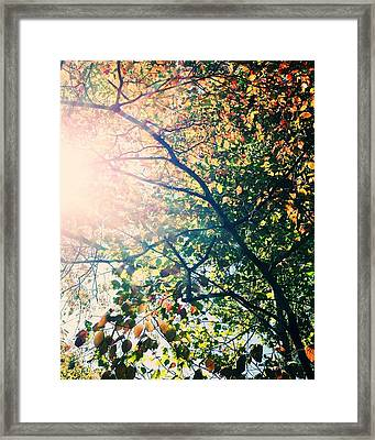 Autumn Flame Framed Print by Kim Fearheiley