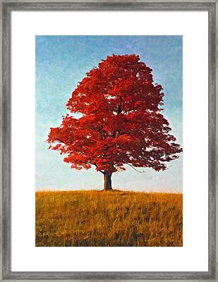 Autumn Flame Oil Framed Print by Steve Harrington