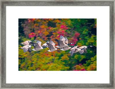 Autumn Flight Framed Print by Brian Stevens