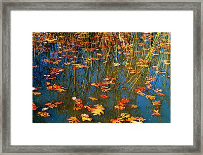 Framed Print featuring the photograph Autumn  Floating by Peggy Franz