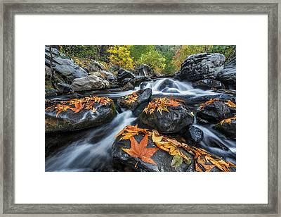 Autumn Flow Framed Print by Guy Schmickle