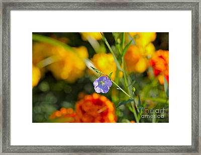Framed Print featuring the photograph Autumn Flower by Jay Nodianos