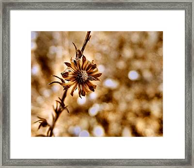 Autumn Flower Framed Print