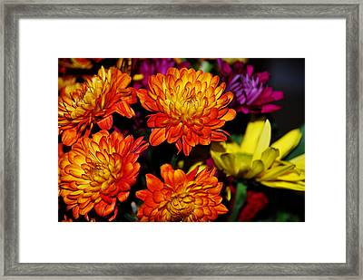 Autumn Flowers Framed Print by Linda Segerson