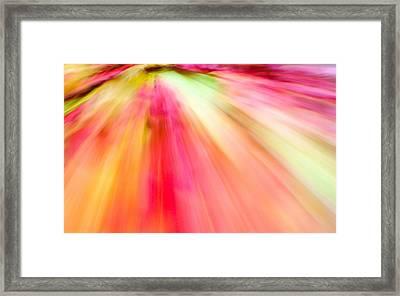 Autumn Foliage 10 Framed Print