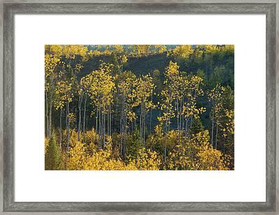 Autumn Foliage In Bridger Teton Framed Print
