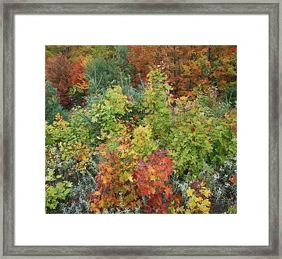 Autumn Foliage Killarney Provincial Park Framed Print by Tim Fitzharris