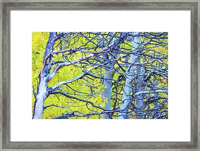 Autumn Foliage On Trees In Sierra Framed Print by Marion Owen