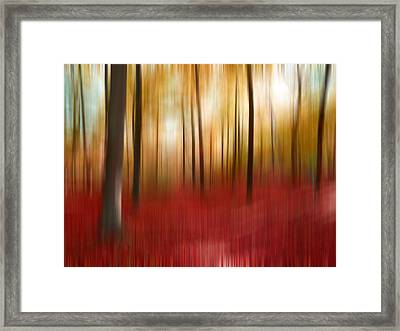 Autumn Forest Framed Print by Angela Bruno