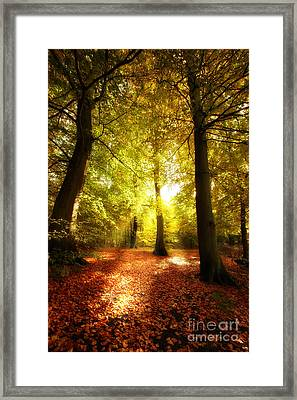 Autumn Forest Framed Print by Boon Mee