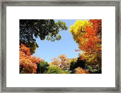 Autumn Forest Colors Framed Print by Boon Mee