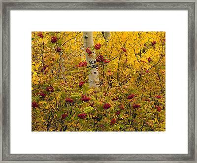 Autumn Forest Colors Framed Print by Leland D Howard