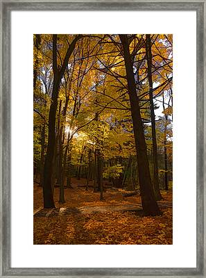 Autumn Forest Glow - Impressions Of Fall Framed Print