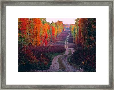 Autumn Forest Road Framed Print