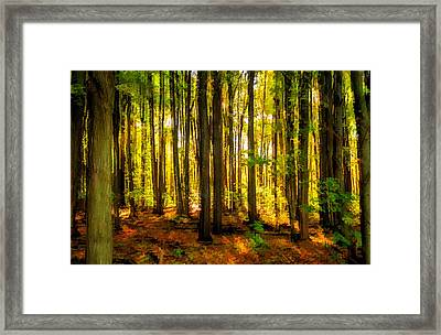 Autumn Forest Framed Print by Steve Harrington