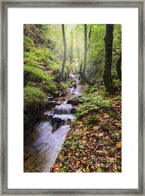 Autumn Forest Stream Framed Print by Ian Mitchell