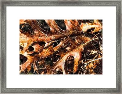 Autumn Forever Framed Print by Bill Kesler