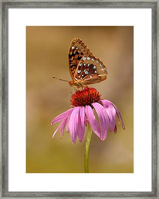 Autumn Fritillary Butterfly Framed Print