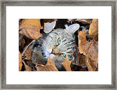 Autumn Fun Framed Print by Susan Leggett