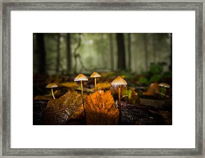 Autumn Fungus Framed Print by Ian Hufton