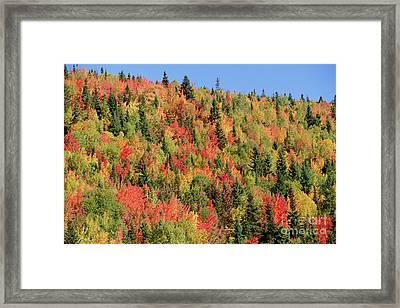 Autumn In Gaspesie Natl Park Quebec Framed Print by Yva Momatiuk John Eastcott