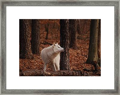Autumn Gaze Framed Print by Lori Tambakis