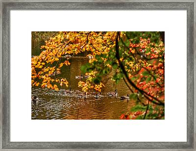 Autumn Geese Abstract Framed Print by Kathi Isserman