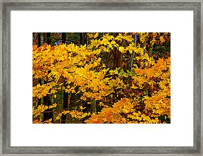 Autumn Glory Framed Print