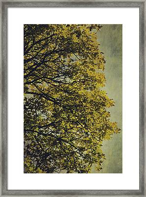 Framed Print featuring the photograph Autumn Glory by Ari Salmela