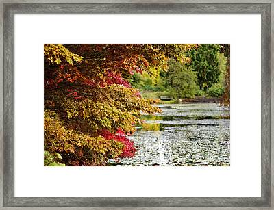 Framed Print featuring the photograph Autumn Glory By The Pond by Maria Janicki
