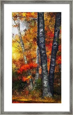 Autumn Glory IIi Framed Print by Dale Jackson