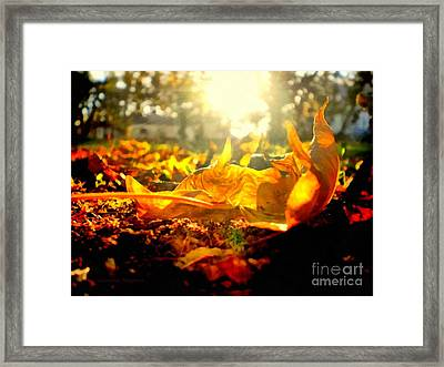 Autumn Glory Framed Print by Janine Riley