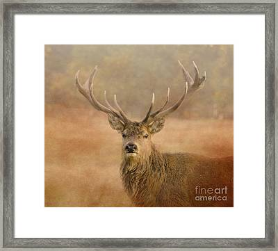 Magnificant Stag Framed Print