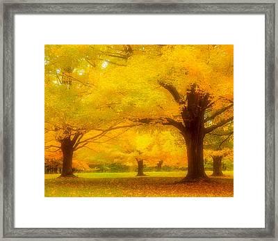 Autumn Glow Framed Print
