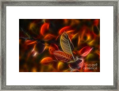 Autumn Glow Framed Print by Veikko Suikkanen