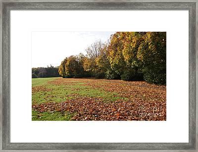Autumns Gold 4 Framed Print