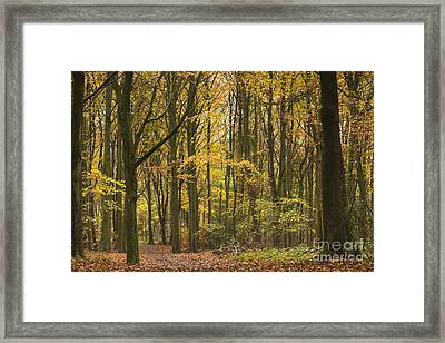 Autumn Gold Framed Print by Anne Gilbert
