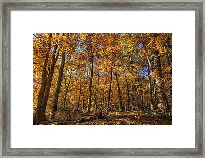 Autumn Gold - Fall - Trees Framed Print by Jason Politte