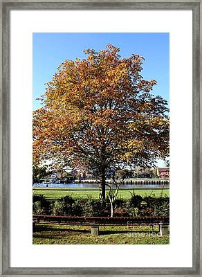 Autumn Gold Framed Print by Terri Waters