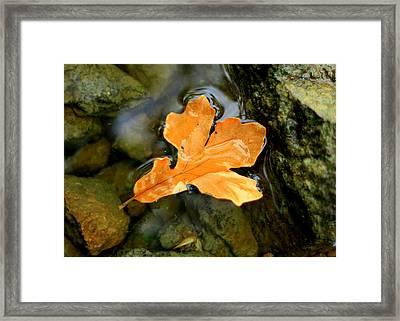 Framed Print featuring the photograph Autumn Gold by Viviana  Nadowski