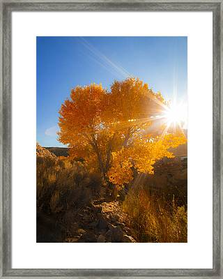 Autumn Golden Birch Tree In The Sun Fine Art Photograph Print Framed Print